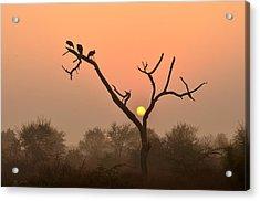 Sunrise At Bharatpur Acrylic Print by Fotosas Photography