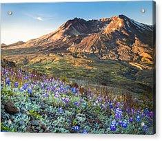 Sunrise At Mount St. Helens Acrylic Print