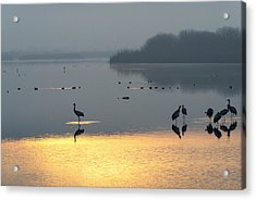 Sunrise Over The Hula Valley Israel 1 Acrylic Print