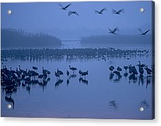 Sunrise Over The Hula Valley Israel 4 Acrylic Print