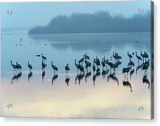 Sunrise Over The Hula Valley Israel 5 Acrylic Print