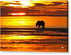 Sunrise Bear Acrylic Print