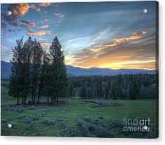Sunrise Behind Pine Trees In Yellowstone Acrylic Print