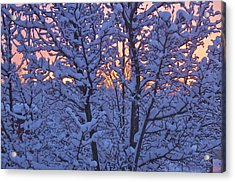 Acrylic Print featuring the photograph Sunrise Branches by Alice Mainville