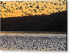 Sunrise Departure Acrylic Print by Dan Myers