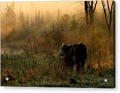 Sunrise Feeding Acrylic Print by Paul Wash