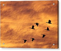 Sunrise Flight 2 Acrylic Print
