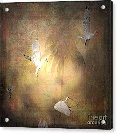 Sunrise Flight Acrylic Print by Irma BACKELANT GALLERIES