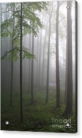 Sunrise Fog Acrylic Print by Melissa Petrey