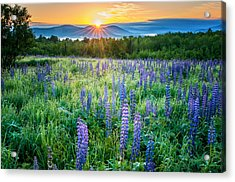 Sunrise From Sampler Fields - Sugar Hill New Hampshire Acrylic Print