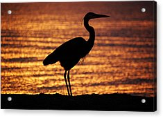 Acrylic Print featuring the photograph Sunrise Heron by Leticia Latocki