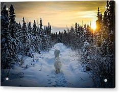 Sunrise Hike Acrylic Print