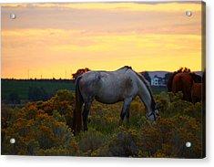 Acrylic Print featuring the photograph Sunrise Horse by Lynn Hopwood