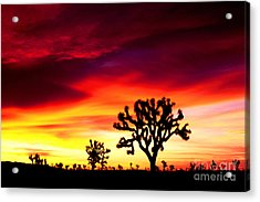 Sunrise In Joshua Tree Nat'l Park Acrylic Print