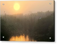 Sunrise In The Everglades Acrylic Print