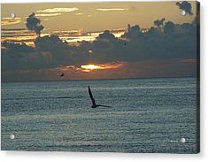 Acrylic Print featuring the photograph Sunrise In The Florida Riviera by Rafael Salazar