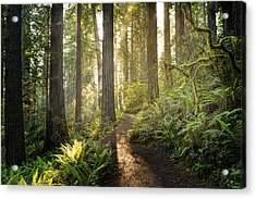 Sunrise In The Redwoods Acrylic Print by HadelProductions