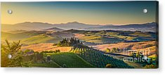 A Golden Morning In Tuscany Acrylic Print