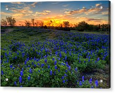 Sunrise Acrylic Print by Mark Alder
