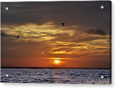 Sunrise On Tampa Bay Acrylic Print by Bill Cannon