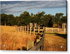 Sunrise On The Fence Acrylic Print by Michele Richter