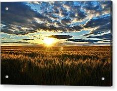 Sunrise On The Wheat Field Acrylic Print