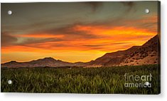 Sunrise Over A Corn Field Acrylic Print by Robert Bales
