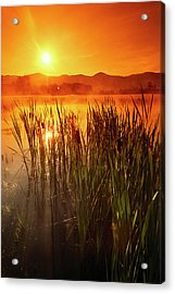 Sunrise Over A Misty Pond Acrylic Print by Richard Nowitz