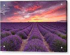 Sunrise Over Lavender Acrylic Print