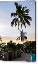 Sunrise Palms Acrylic Print