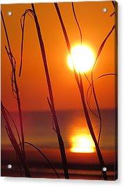 Acrylic Print featuring the photograph Sunrise Plant by Nikki McInnes