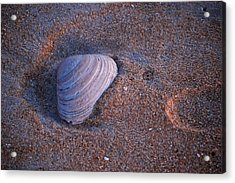 Sunrise Shell Acrylic Print