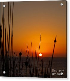 Acrylic Print featuring the photograph Sunrise Silhouette by Trena Mara