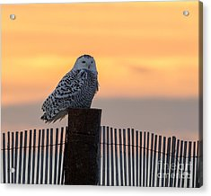 Acrylic Print featuring the photograph Winter At The Shore by Stephen Flint