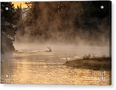 Sunrise Swim Acrylic Print