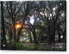 Sunrise Through The Oaks Acrylic Print