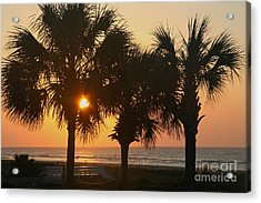 Sunrise Through The Palms Acrylic Print by Kevin McCarthy