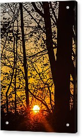 Sunrise Through Trees Acrylic Print