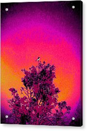 Acrylic Print featuring the painting Sunrise To Sunset Nature Is Beautiful by David Mckinney