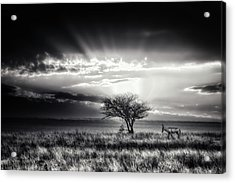 Sunrise With Hartebeest Acrylic Print by Piet Flour