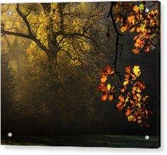 Sun's Decoration Acrylic Print by Marek Boguszak