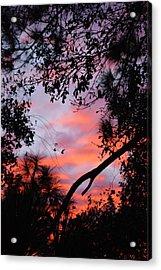 Sunset 16 Acrylic Print