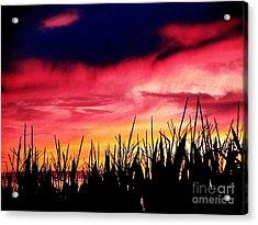 Sunset 365 62 Acrylic Print by Tina M Wenger