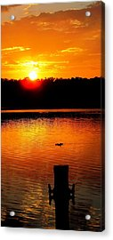 Sunset And Ducks Acrylic Print by Will Boutin Photos