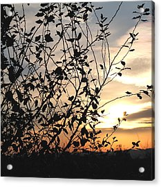 Acrylic Print featuring the photograph Sunset And Nature's Silhouette by Candice Trimble