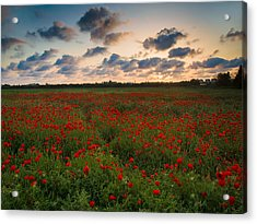 Acrylic Print featuring the photograph Sunset And Poppies by Meir Ezrachi