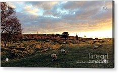 Sunset And Sheep Acrylic Print by Merice Ewart