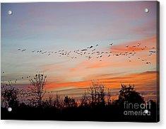Sunset At Ankeny Wildlife Refuge Acrylic Print