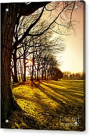 Sunset At The Park Acrylic Print by Daniel Heine