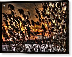 Acrylic Print featuring the photograph Sunset At The Pond 5 by Michaela Preston
